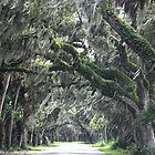 Mossy  Road by Steven Gibson