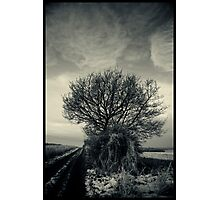 Winter Sky Photographic Print