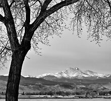 Across The Lake in Black and White by Bo Insogna