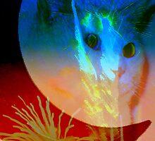 Celestial cat by ♥⊱ B. Randi Bailey