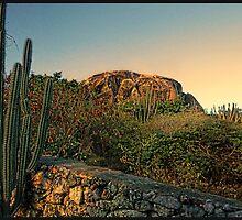 Desert Cactus by Bill Gorman