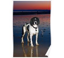 benson at cooden beach - sunset Poster