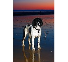 benson at cooden beach - sunset Photographic Print
