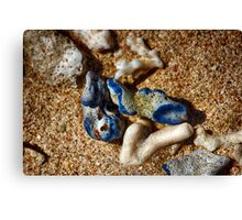 Blue Coral on the beach Canvas Print
