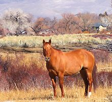 The Pasture by marilyn diaz