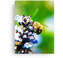 Bee on Common Bugle VRS2 Canvas Print