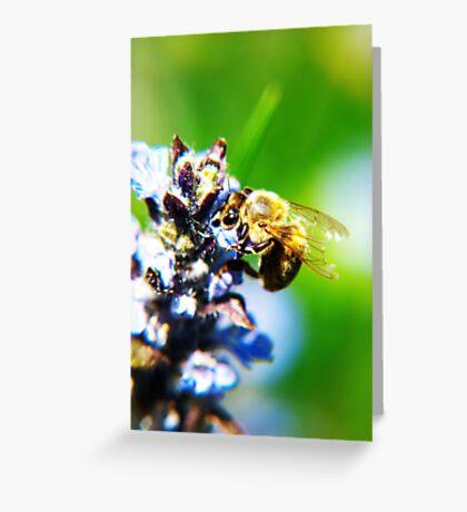 Bee on Common Bugle VRS2 Greeting Card