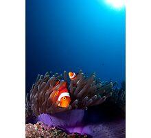 Sunbathing Nemo Photographic Print