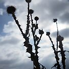 spikes by lsmelancholy