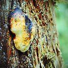 Strange Fungus by BPhotographer