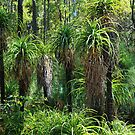 Grass trees meeting by Adrian Kent