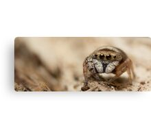 (Simaethula ZZ483) Jumping Spider #5 Canvas Print