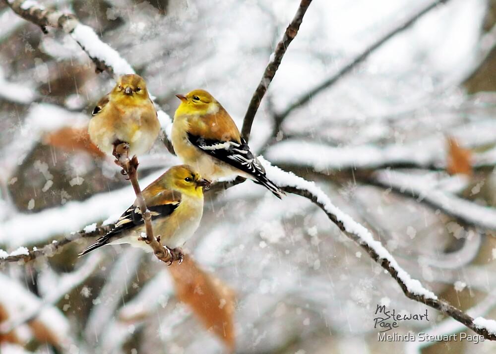 """""""Triple Tweet!"""" by Melinda Stewart Page"""