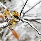 &quot;Triple Tweet!&quot; by Melinda Stewart Page