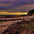 Forest Beach by Bill Gorman