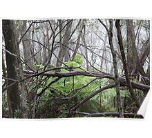 Bushland in Mist Poster