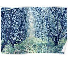 Fairy-tale Forest Poster