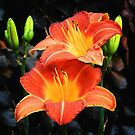 Blazing Lilies by Sharon Woerner