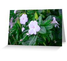 Flowers in Sitting Greeting Card