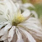 Summer Clematis by Margi