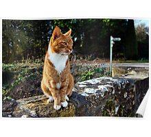Kitty At The Mill Poster