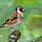 Goldfinch (Carduelis carduelis) by Cantus