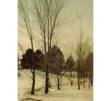 December Trees Photographic Print