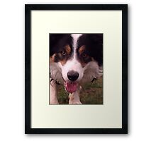 Up close with Laddie. Framed Print