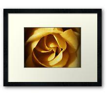 NOVEMBER ROSE Framed Print