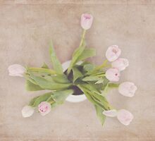 Tulips from above by Debbie Allan