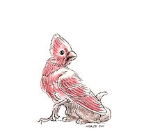 Sketch -- Mythological House Griffin, Cardinal Variety Photographic Print