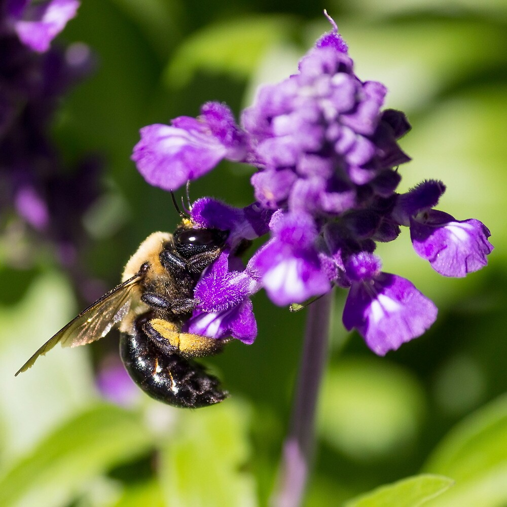 Bee 4 by John Velocci