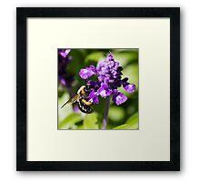 Bee 4 Framed Print