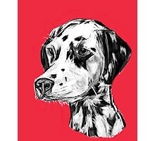 Dalmatian Red Photographic Print