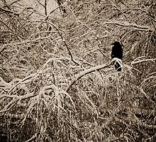 Rook in snow scene by deanosbaggio