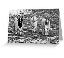 Three Goats B&W Greeting Card