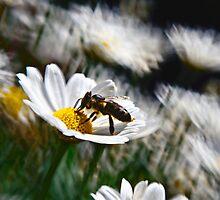 Buzzing Around by Kasia-D