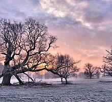 Winter Sunrise by Simon Pattinson
