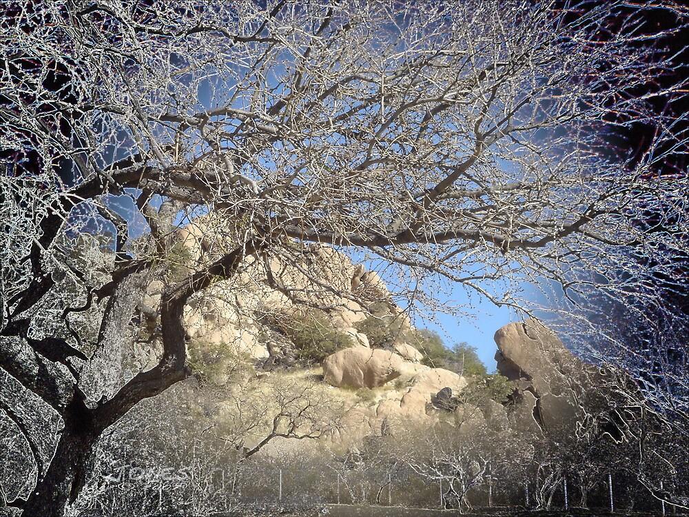"""Arizona Tree"" by Gail Jones"