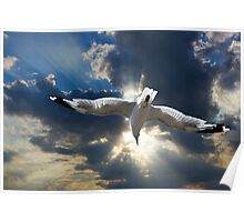 Gull Flying into the Sunset Poster