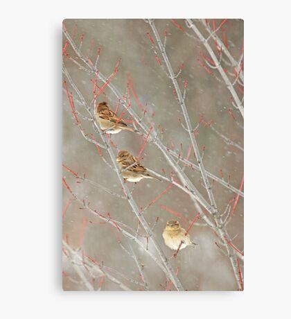Three In A Tree ~ Canvas Print