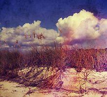 South Carolina Sand Dunes by Phil Perkins