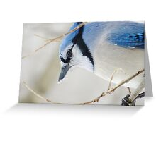 Cold and Blue Greeting Card