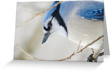 Cold and Blue by lorilee