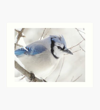 Not Another Blue Jay!!!! Art Print