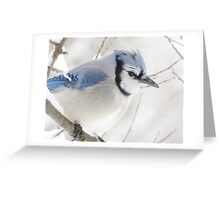 Not Another Blue Jay!!!! Greeting Card