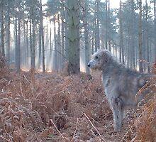 Hazard surveys his forest by SwampDogPhoto