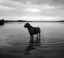 Cooling Off by SwampDogPhoto