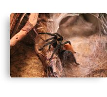 RED KNEE SPIDER  Canvas Print