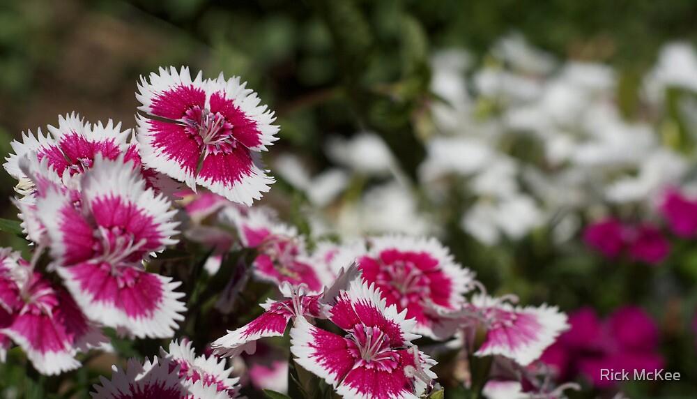 Pink Flower Burst by Rick McKee